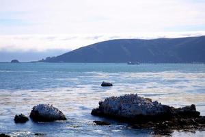 Birds on the rocks of Avila Beach, California photo