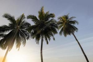 Coconut palm trees at sunset photo