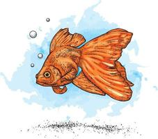 Beautiful goldfish and water vector