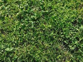 pasto verde en un campo foto