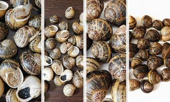 Collage of colorful snails