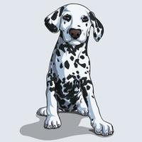 Cute Dalmatian dog sitting isolated on white background vector
