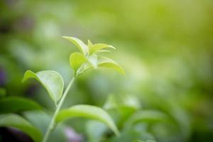 Close-up of a green plant photo