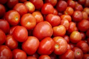 Close-up of red tomatoes photo