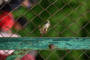 Bird on a fence with people in the background