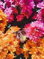 Butterfly on colorful flowers