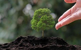 Small tree growing photo