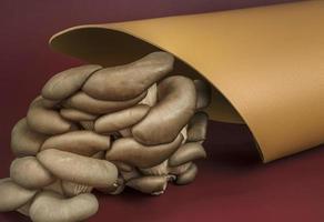 Eco-leather based on mushroom mycelium. Reusable alternative leather, sustainable production photo
