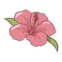 Hand drawn pink hibiscus icon. Flat style line drawing colourful isolated illustration vector
