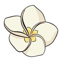 Hand drawn white and yellow plumeria icon isolated on white background. Exotic flower vector illustration, flat style. Line drawindg frangipani tropical flower.