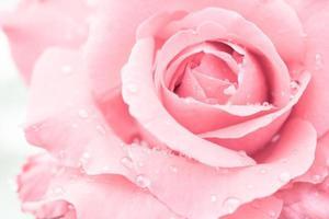 Cerca de una rosa roja con gotas de agua foto