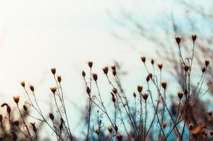 Plants and sky photo