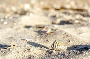 Small seashell on sand photo