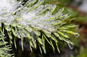 hielo en abeto foto