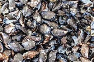 Group of mussel shells photo