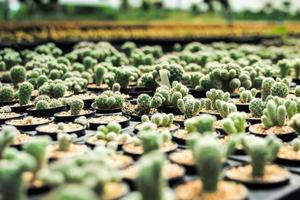 Variety types of cactus in the farm with selective focus and blurred background