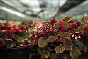 pequeñas flores rojas en la granja floral foto