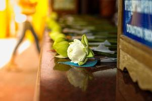 Selective focus of folding lotus flower at the temple photo
