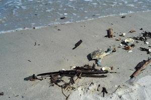 Closeup picture of wave hitting the sandy beach with wooden stick and garbage on the coast