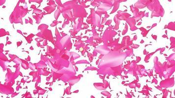 fond de pétales de rose flottant video