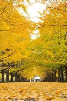 The walkway covered by the ginkgo root's yellow leaves at the public park in the city photo