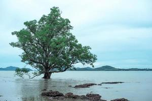 Isolated big old mangrove tree on the beach with seascape and landscape of island in background photo