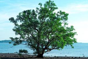 Primer plano de un viejo árbol aislado en la playa con el fondo del mar foto