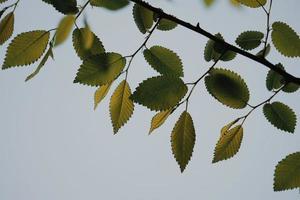 hojas de los árboles verdes en la temporada de primavera foto