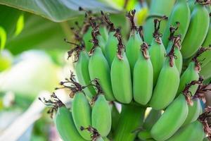 Close-up of green bananas photo