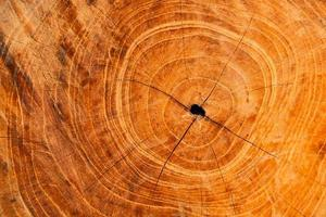 Close-up of wood rings