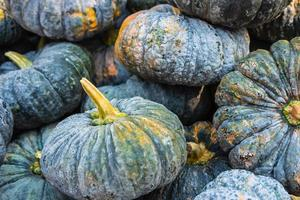 Dark group of pumpkins photo