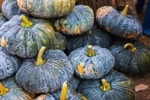 Dark pumpkin pile photo