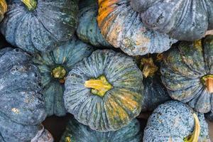 Top view of dark pumpkins photo