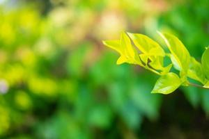 hojas verdes con espacio de copia foto