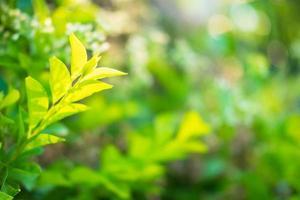 arbusto verde vibrante foto