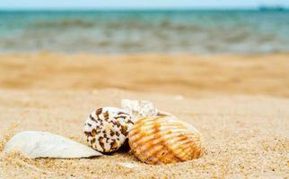 Seashells on a beach photo