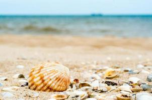 Lots of shells on a beach photo