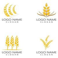 conjunto de diseño de icono de vector de trigo de agricultura
