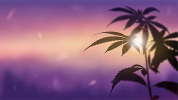 panorama borroso del paisaje al atardecer con marihuana en primer plano. silueta de cannabis contra la puesta de sol. vector