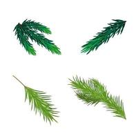 Christmas tree branches isolated on white background for your creativity