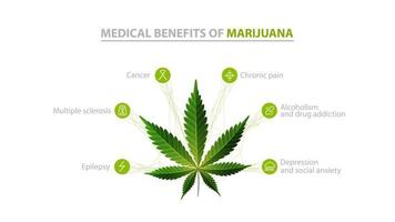 Medical benefits of marijuana, white information poster with icons of benefits and green leafs of cannabis