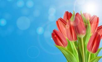 Fondo de flor de tulipanes naturales realistas con cielo. ilustración vectorial vector