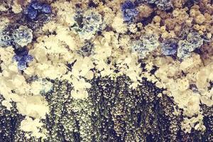 texturas de flores vintage foto