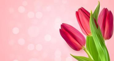 Fondo de flor de tulipanes naturales realistas. ilustración vectorial vector