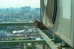 Selective focus on a bird sitting on the nest for hatching its eggs on the steel cage of condominium balcony photo