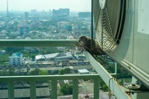 Closeup bird in a nest on the steel cage of air conditioner at the terrace of high condominium with blurred cityscape background in sunshine morning photo
