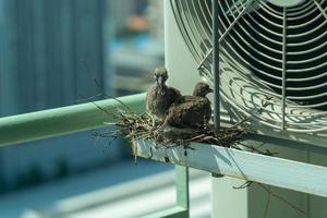 Closeup birds in a nest on the steel cage of air conditioner at the terrace of high condominium with blurred cityscape background in sunshine morning photo