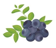 A branch of ripe blueberries, isolated on a white background. Beautiful juicy berries surrounded by bright foliage. Kitchen utensils design element. Vector illustration