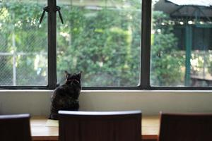 Back portrait of black cat sits alone on the table and looks out of the window photo