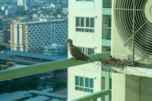 Closeup birds in a nest on the steel cage of air conditioner at the terrace of high condominium photo
